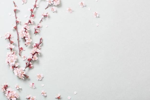 Roze kersenbloemen op wit