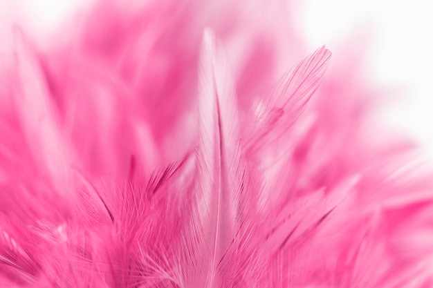 Roze kippenveren in zacht en vervagen stijl voor achtergrond