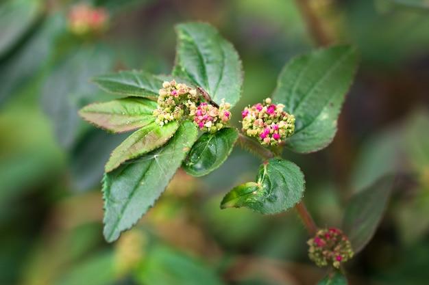 Roze kleine bloemen isoleren op achtergrond.