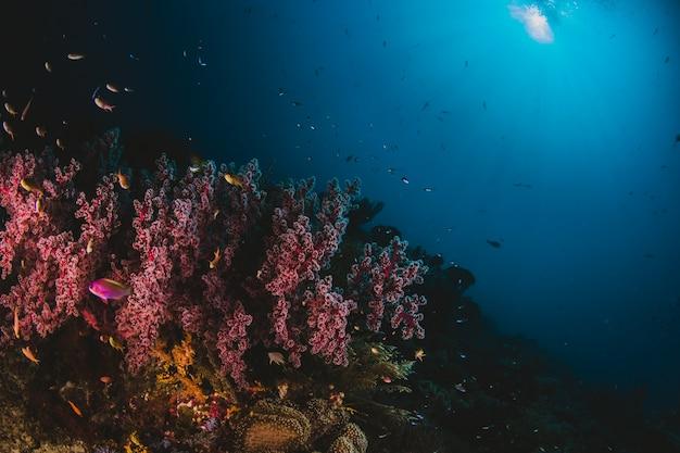 Roze koraal en zonlicht