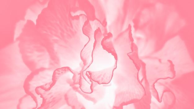 Roze koraal panorama achtergrondkleur met anjer bloemenpatroon