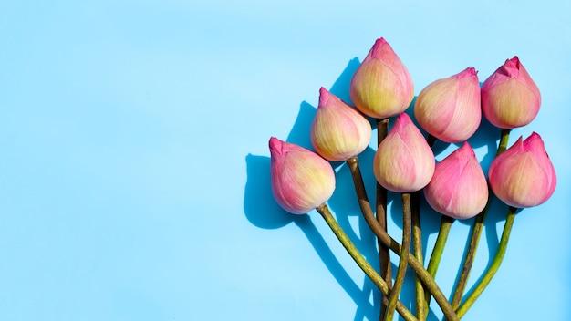 Roze lotusbloem op blauw.