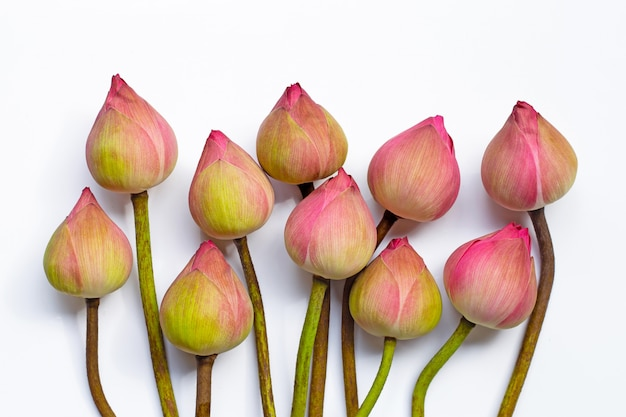 Roze lotusbloem op witte achtergrond.