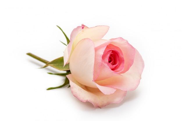 Roze nam geïsoleerd op wit wit toe. hou van concept
