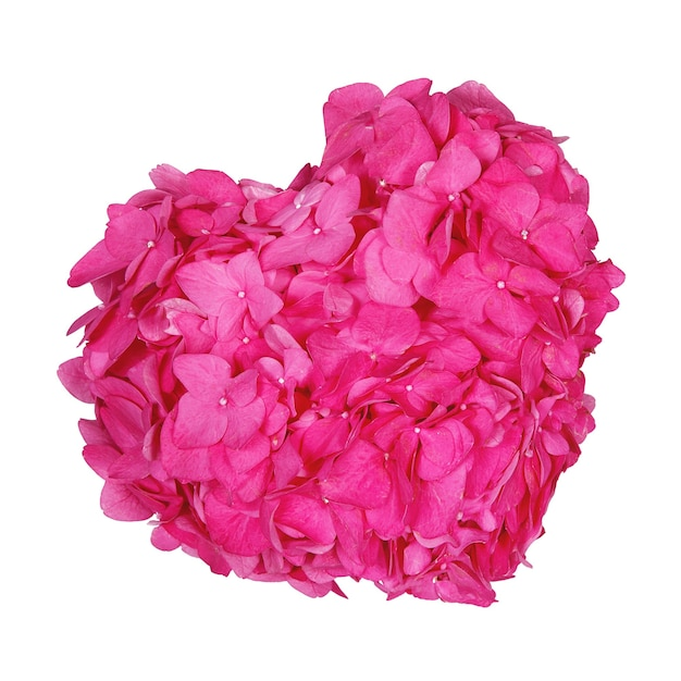 Roze of rood hart gemaakt van hortensia bloem op witte geïsoleerde achtergrond voor webdesign briefkaart banner valentijnsdag bruiloft verjaardag internationale vrouwendag