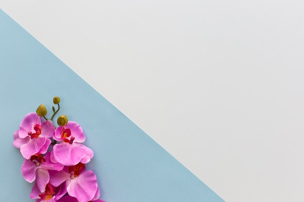 Roze orchideebloemen die op hoek van dubbele achtergrond worden geschikt