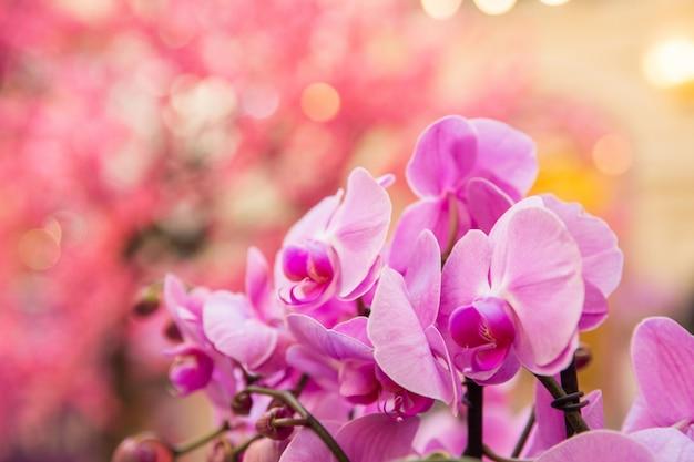 Roze orchideeën. viering van de internationale vrouwendag