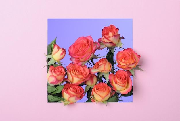 Roze papieren frame met rode gele rozen op blauwe ondergrond