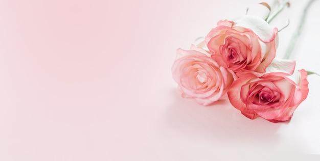 Roze perzik roze bloemen geïsoleerd op licht roze achtergrond