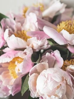 Roze pioen bloemen achtergrond. plantkunde achtergrond. bovenaanzicht