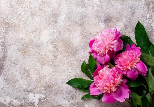 Roze pioenbloemen op lichte oppervlakte
