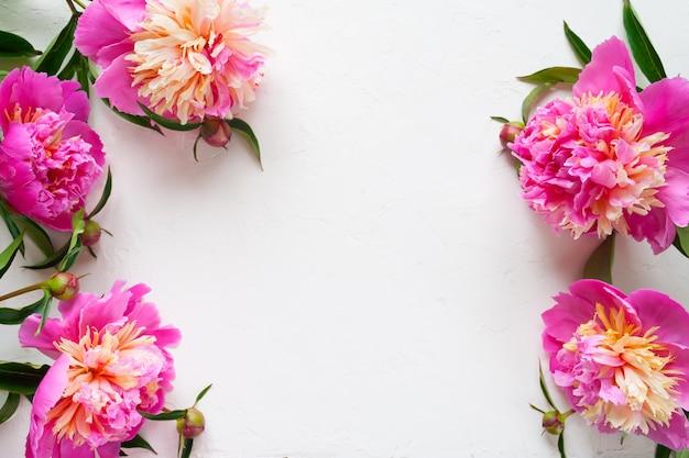 Roze pioenen op witte achtergrond