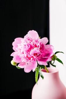 Roze pioenroos met waterdruppels op een zwart-witte achtergrond, mooie pluizige bloem, kopieer ruimte