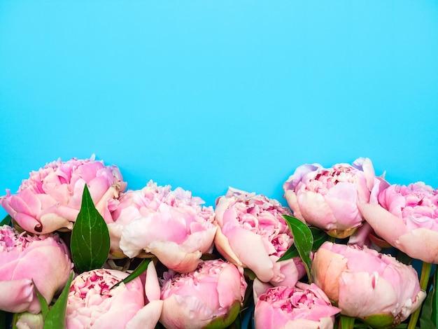 Roze pioenrozen die in de tuin worden gekweekt, liggen in een rij onderaan op een blauwe achtergrond