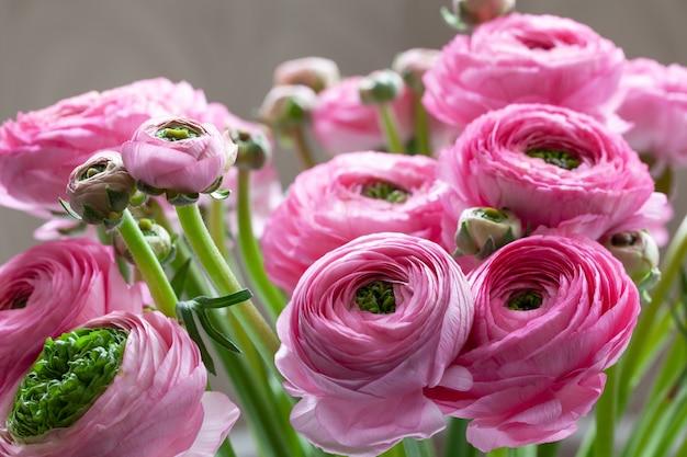 Roze ranunculus boeket achtergrond. macro. detailopname. zachte selectieve aandacht.