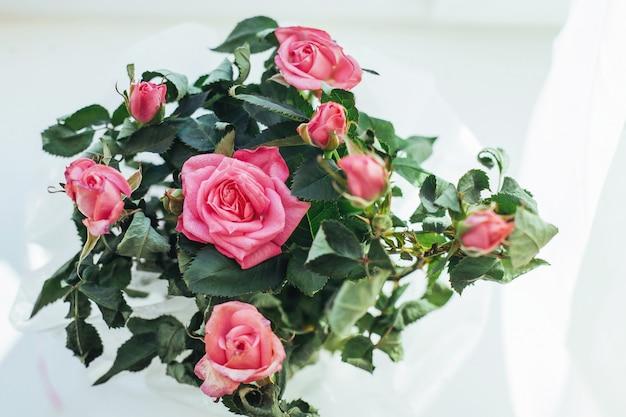 Roze roos bloemen regeling geïsoleerd op wit