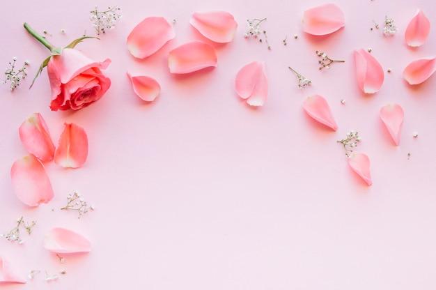 Roze roos en bloemblaadjes over lichtroze achtergrond met ruimte in het midden
