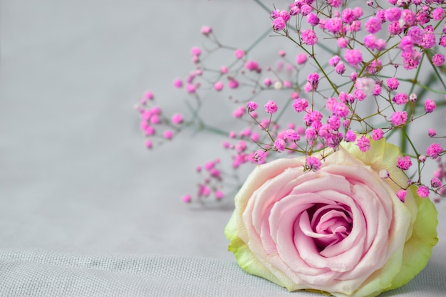 Roze roos en gipskruid hebben ruimte voor tekst. valentijnsdag achtergrond.