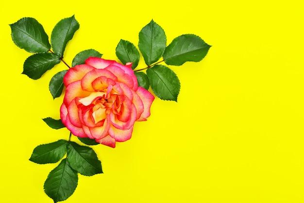 Roze roos met groene bloemblaadjes op een gele achtergrond