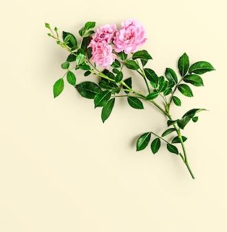 Roze roze bloem met stengel en bladeren op gele achtergrond. kleine klimrozen in de zomertuin. bovenaanzicht, plat gelegd