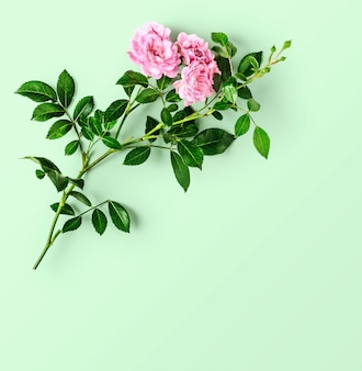 Roze roze bloem met stengel en bladeren op groene achtergrond. kleine klimrozen in de zomertuin. bovenaanzicht, plat gelegd