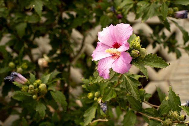 Roze roze bloem op tak en blad
