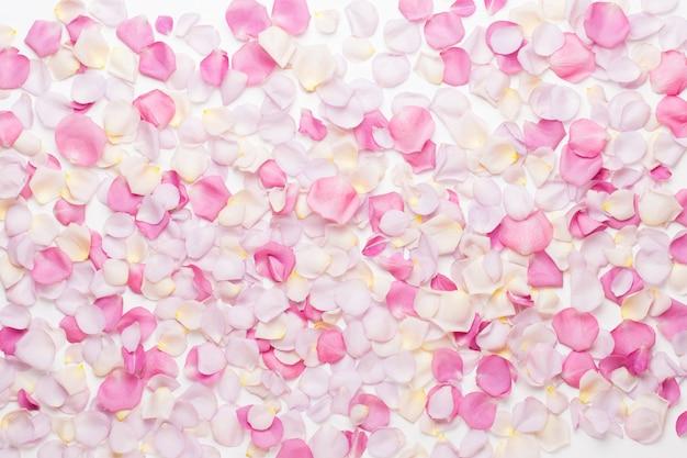 Roze roze bloemen bloemblaadjes op witte achtergrond. plat lag, bovenaanzicht, kopie ruimte.