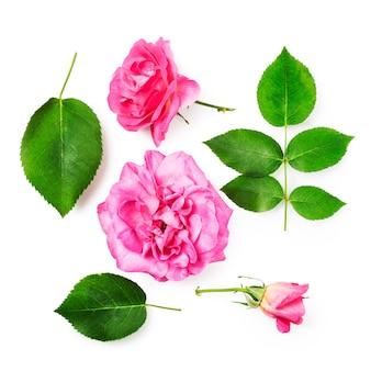Roze roze bloemen en bladeren collectie geïsoleerd op een witte achtergrond uitknippad opgenomen. bloem samenstelling. bloemdessin. bovenaanzicht, plat gelegd