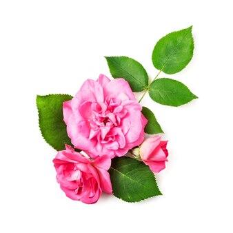Roze roze bloemen en bladeren geïsoleerd op een witte achtergrond uitknippad opgenomen. bloem samenstelling. bloemdessin. bovenaanzicht, plat gelegd