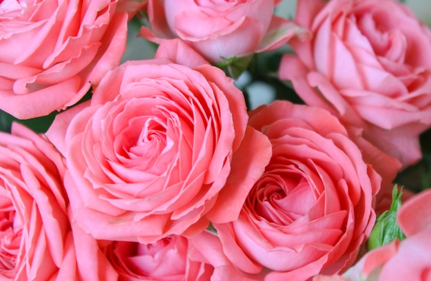 Roze rozen in een boeketclose-up als achtergrond
