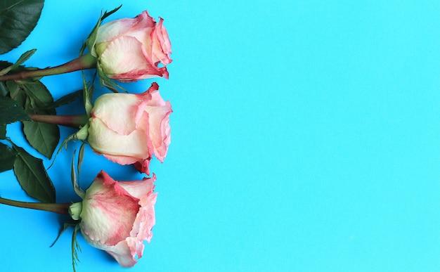 Roze rozen op blauwe achtergrond bord