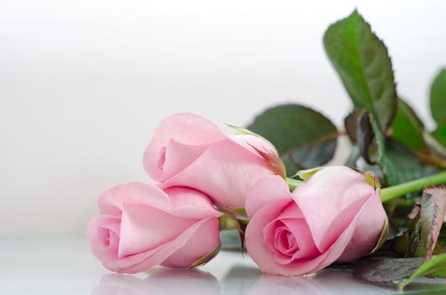 Roze rozen op grijs