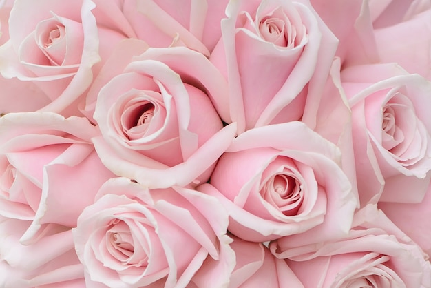 Roze rozenclose-up