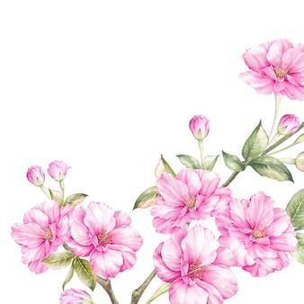 Roze sakura bloemen tak.