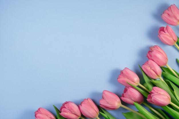 Roze tulpenbloemen die op blauw worden geïsoleerd