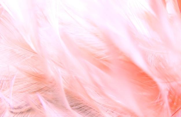 Roze veertextuur als achtergrond.