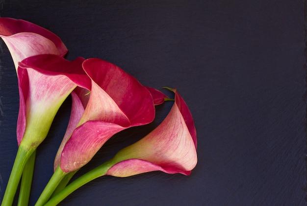 Roze verse calla leliebloemen