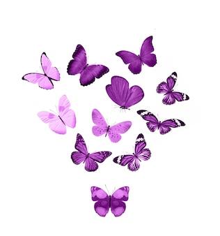 Roze vlinders geïsoleerd op een witte achtergrond. tropische motten. insecten voor ontwerp. aquarel verven