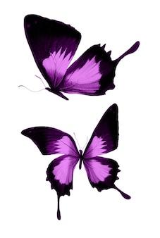 Roze vlinders geïsoleerd op een witte achtergrond. tropische motten