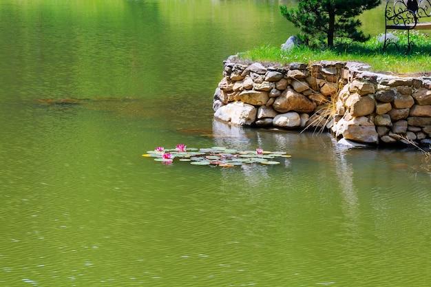Roze waterlelie bloem bloesem in het meer zomerlelies drijvend in het meer