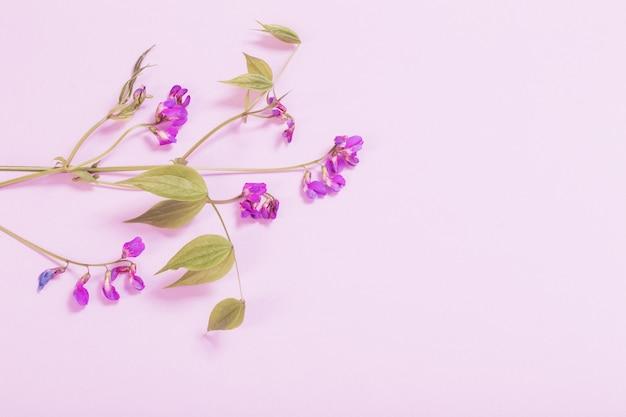 Roze wilde bloemen op roze papieren oppervlak