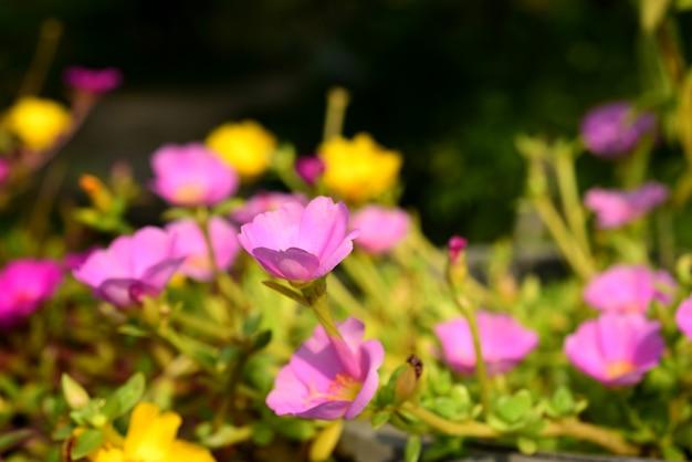 Roze witte bloem.