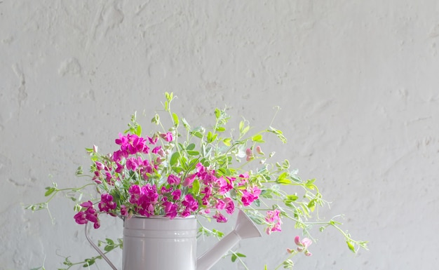 Roze zomerbloemen in gieter op witte achtergrond muur