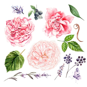 Rozen, lavendel en bladeren, aquarel, kunnen worden gebruikt voor wenskaart, uitnodigingskaart voor bruiloft, verjaardag en andere vakantie- en zomerachtergrond. illustratie