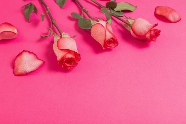Rozen op roze papieren achtergrond