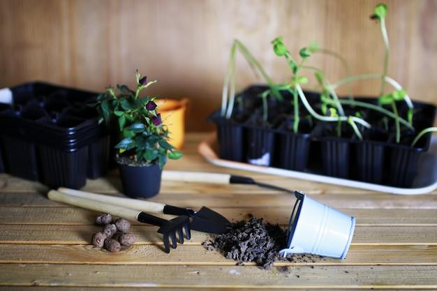 Rozen verplanten in pot