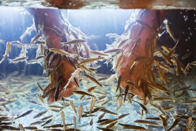 Rufa garra fish spa met mensenvoet