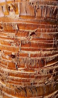 Ruige schors van palmboom. geometrische vormen, structuur, textuur.
