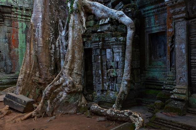 Ruïnes van de ta prohm-tempel, omringd door gigantische wortels in angkor wat, cambodja