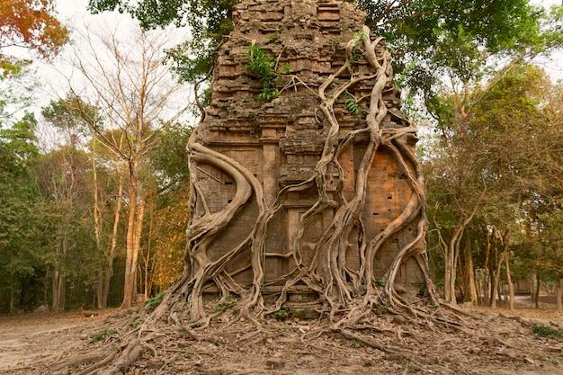 Ruïnes van doelkampong tom wat tempel met wortel van bomen in bos kambodja.